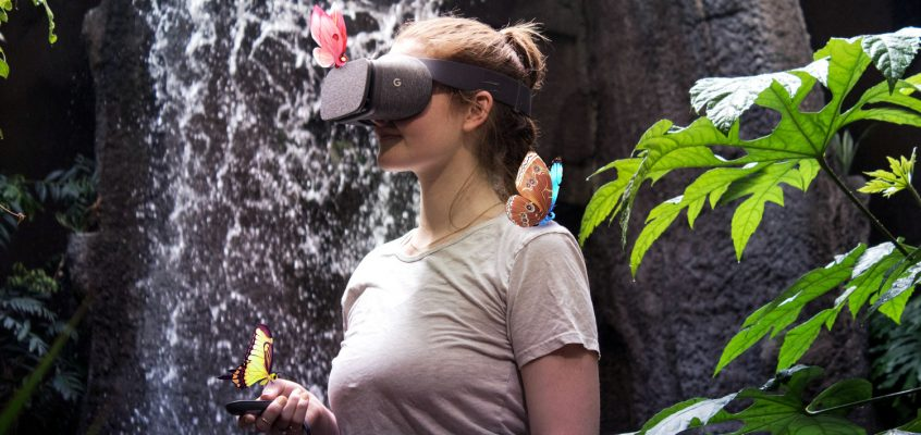 Fluttering Through a Forest in Virtual Reality