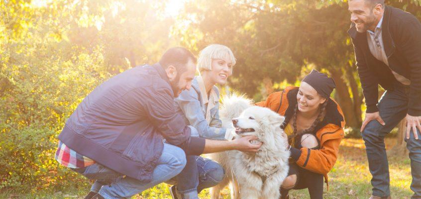 Tech Trends Purina Pet Tech Dogs Cats Prize Social Enterprise