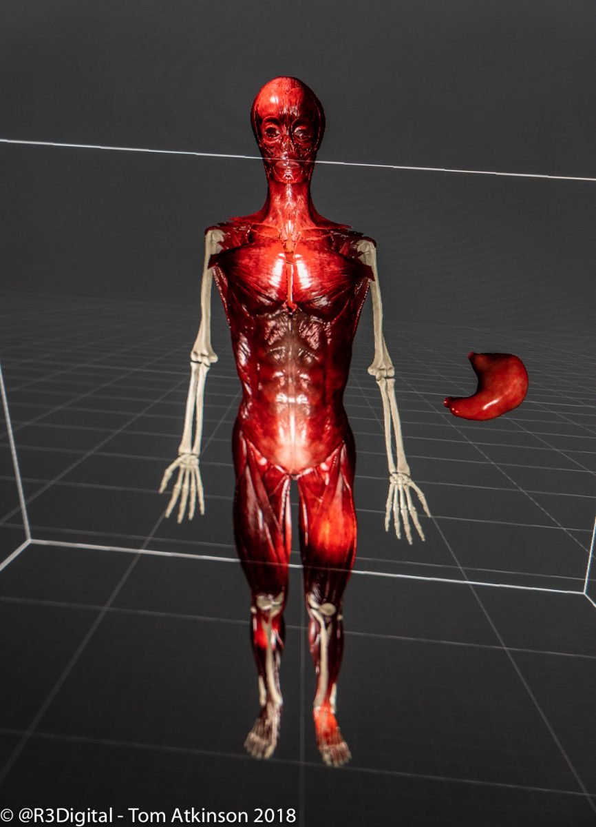 Virtual Reality Minecraft And Pet Anatomy But Not As You Know It