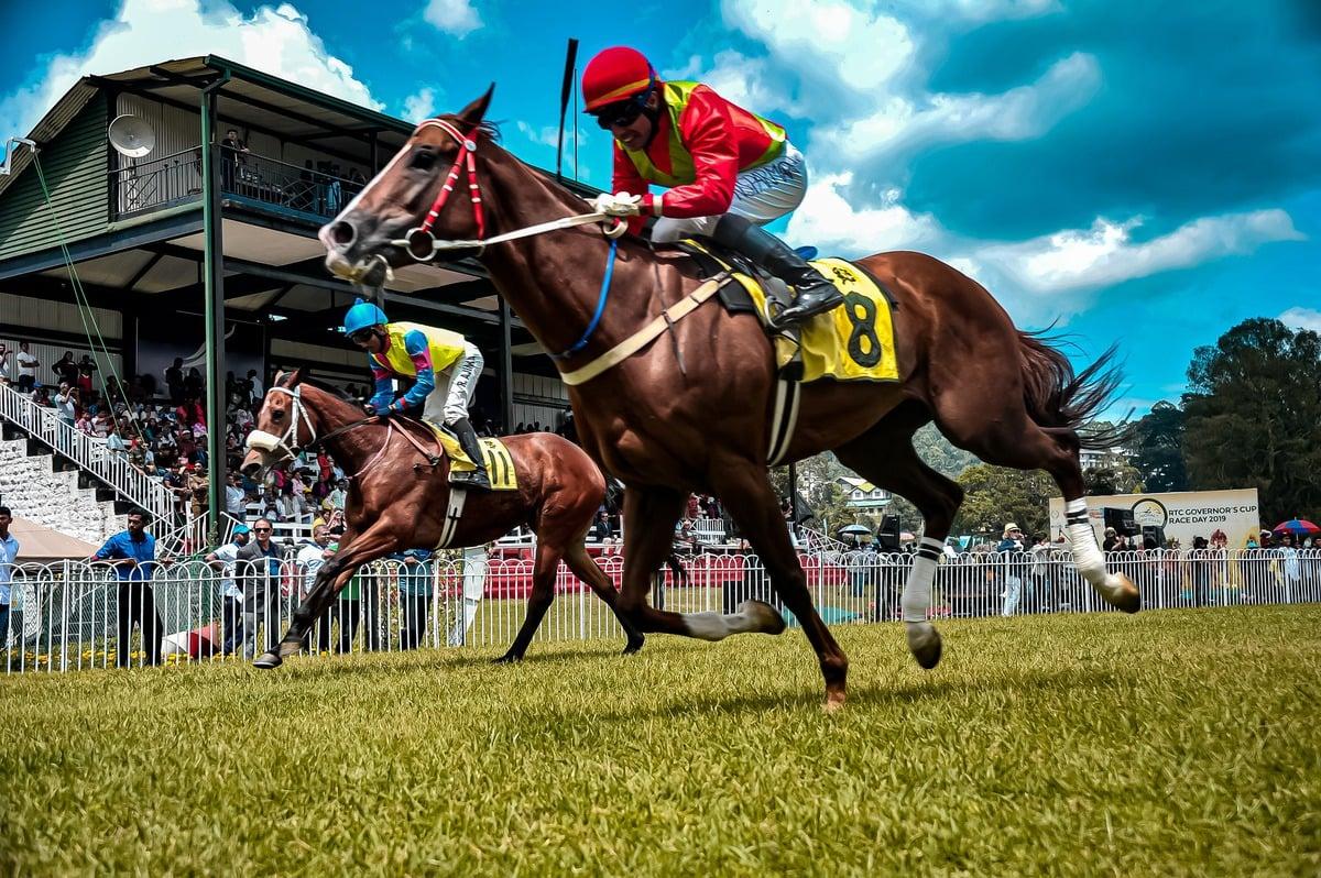 Horse Racing Trends